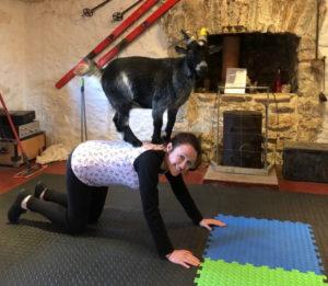 Goat pilates 4