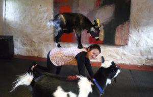 Goat pilates2