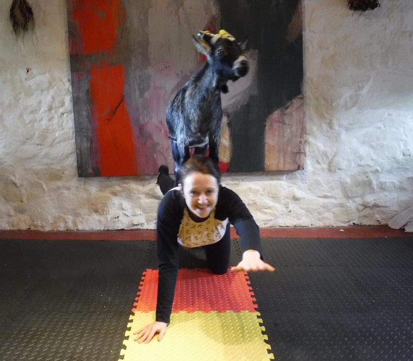 Goat pilates3